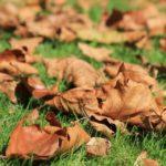 Kert ősszel, de mi legyen a  lehullott levelekkel