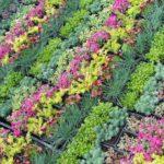 Sziklakertek növényei, tippek és ötletek.