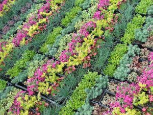 sziklakertek növényei