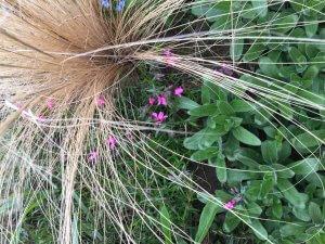 Tavaszi kertészkedés, kis virág