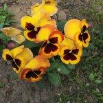 Tavaszi kertészkedés képekben, tippek mit ültessünk