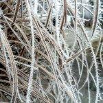 Kerti munkálatok a tél beállta előtt