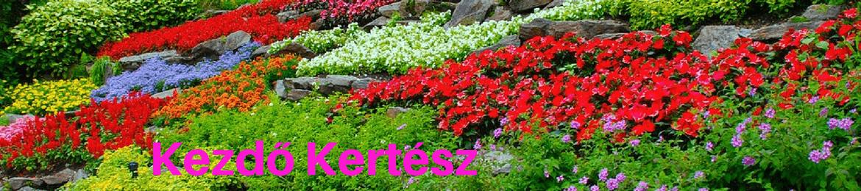Kezdő Kertész logó -Kert, kertész, kertészkedés, kertépítés, kerti növények, kerti virágok, évelő növények, évelő virágok.