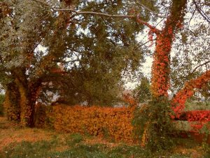 Kert ősszel