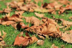 Lehulló levelek a kertben