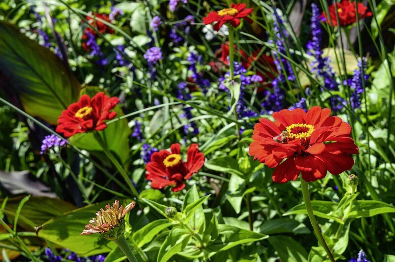 Alacsony egynyári virágok