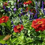 Alacsony egynyári virágok – 4 tarka színben pompázó növény