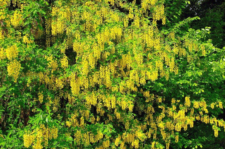 Színek a kertben – a vidám sárga