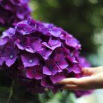Kerti dísznövények ápolása 2. – legjobb védekezés a megelőzés