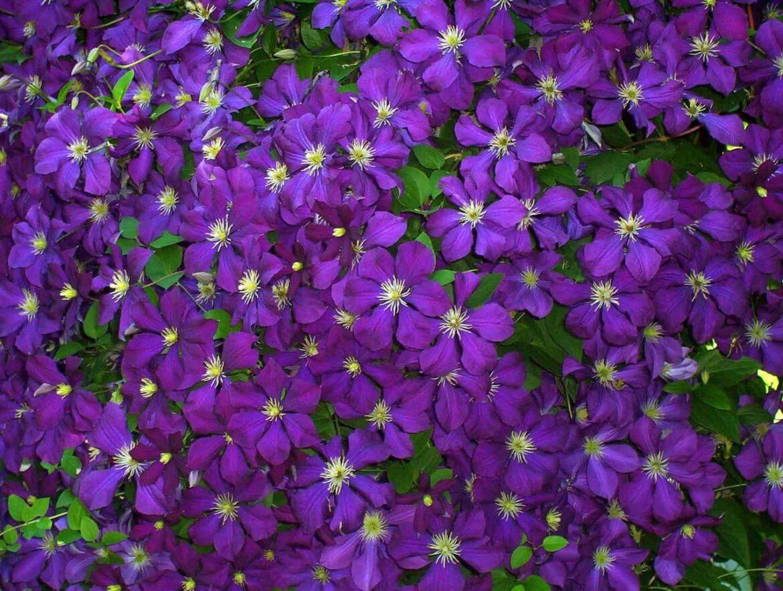 Futó virág teraszra: miért jó, és mire figyeljünk.