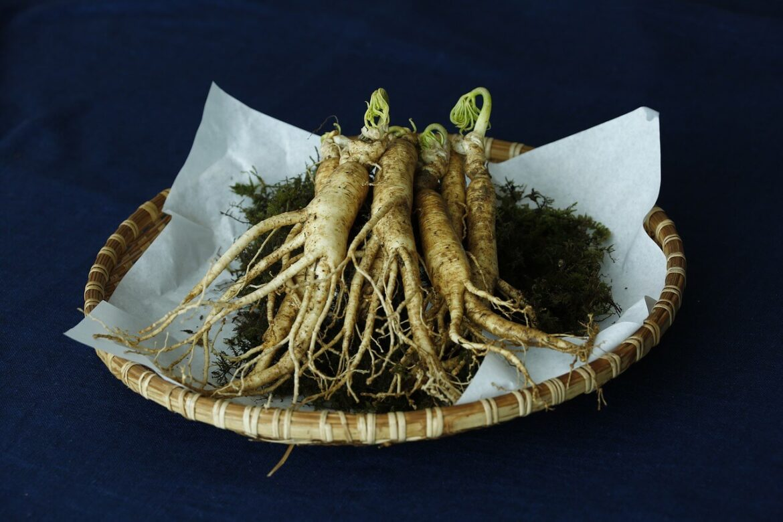 Ginseng (Panax) gyógynövény