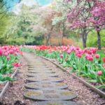 Gumós virágok fajtái – eloszlatunk egy tévhitet