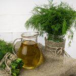 Kapor (Anethum graveolens L.) fűszernövény