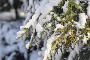kertészkedés télen
