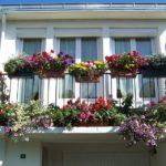 Kertészkedés kert nélkül 2. – az erkélyen