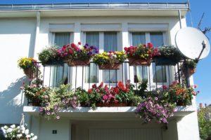 Kertészkedés az erkélyen