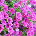 Kerti dísznövények ápolása 1. – találjuk meg az optimumot