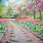Kerti növények és 5 egyszerűen kezelhető növény