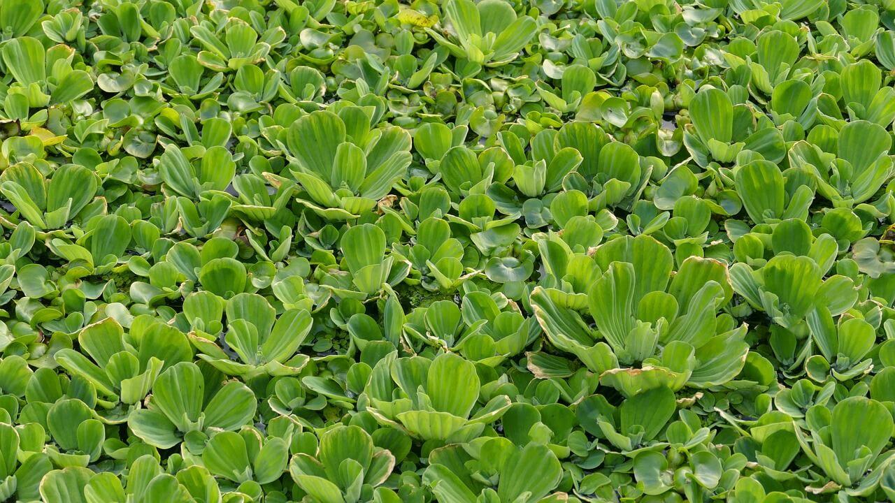 Kerti tavi növények ültetése
