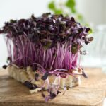 Kerti zsázsa (Lepidium sativum) felhasználása