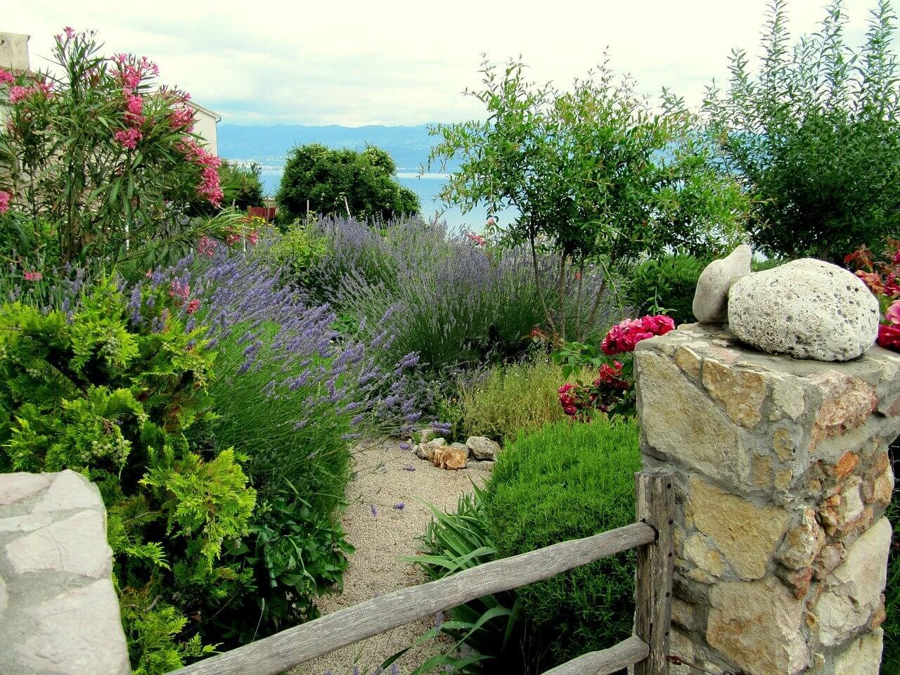 A levendula növény és gyógyhatásai