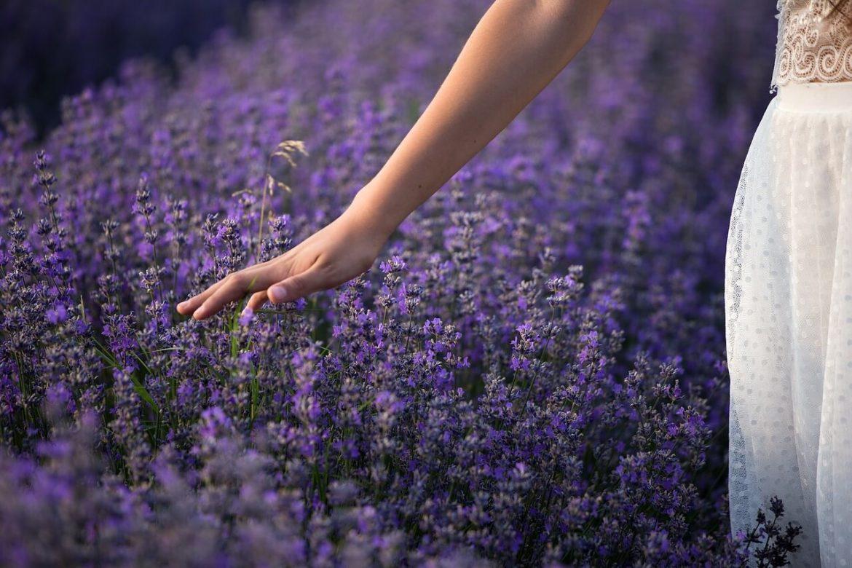 Színek a kertben, lila