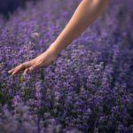 Színek a kertben – a buja lila: 3 csodálatosan élénk virág otthonodban