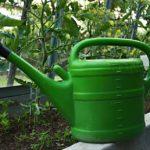 Locsolás okosan – hogyan öntözd kerti növényeidet