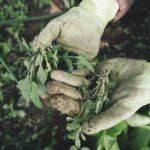 6 hasznos kiegészítő kertészkedéshez