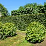Élő kerítések a természetes udvarhoz: 3+3 tipp szuper élő sövényekre