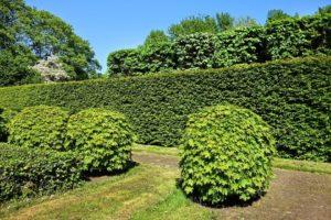 Élő kerítések - sövény