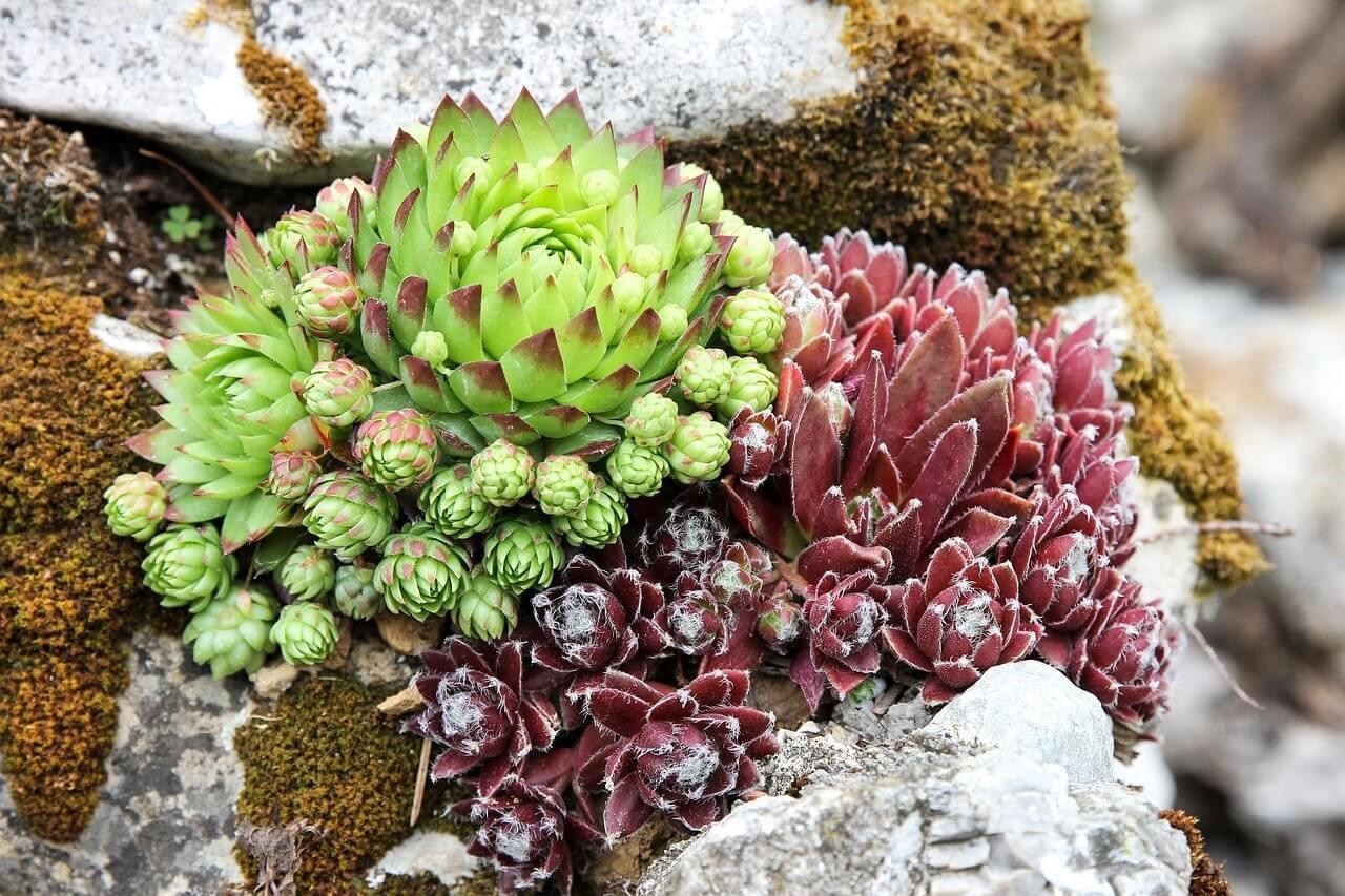 Mikor ültessünk sziklakerti növényeket?