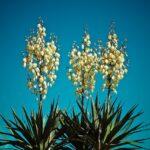 Napot szerető növények